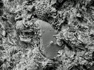 Diatomite