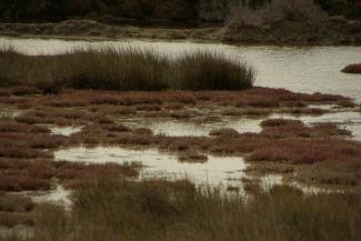 Route 1 Alyki wetland