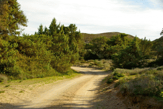 Route 4 Perlite dirt road to Agios Athanasios through the cedar forest