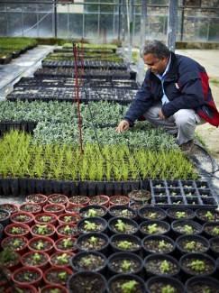 S&B Plant Nursery